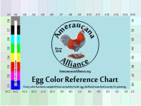 Ameraucana Egg Color Reference Chart